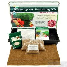 wheat_grass_growing_kit.jpg