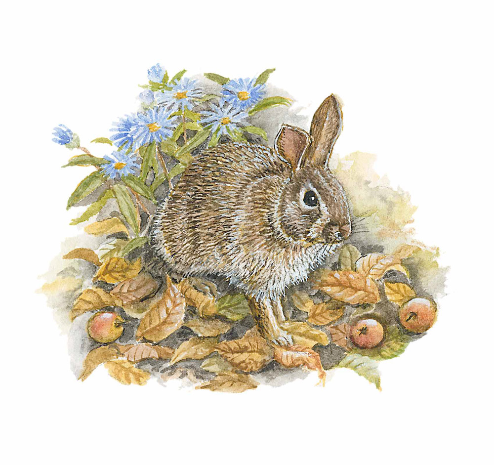 Cottontail and Crabapples